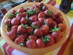 Beim Erdbeeren pflücken gibt es einiges zu beachten