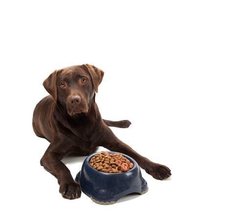 Glücklicher Hund vor seinem Hundefutter-Napf