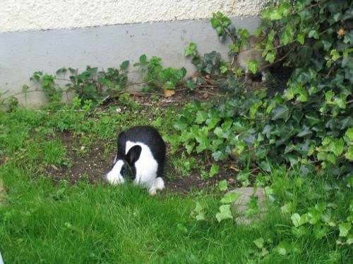 Im Freiand fühlen sich Kaninchen wohl