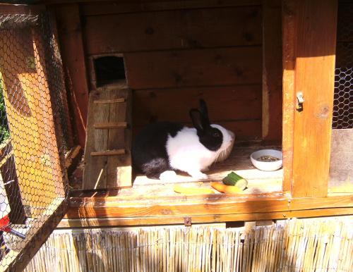 Ein solider Kaninchenstall schützt vor schlechtem Wetter und vor Gefahren