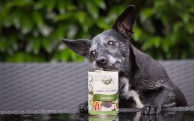 5 gute Gründe für Insektenprotein in Hunde- und Katzenfutter